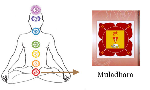 Chakra Meditation : Image of Muladhara Chakra